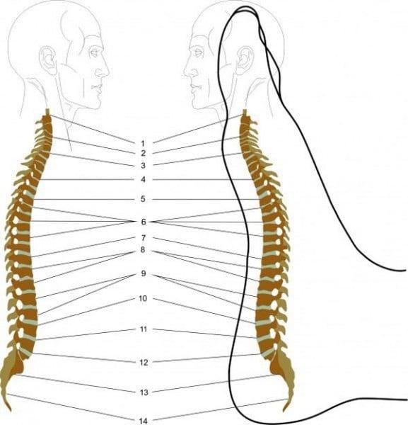 Voici comment faire un massage des pieds contre le mal de dos for Douleur interieur du pied