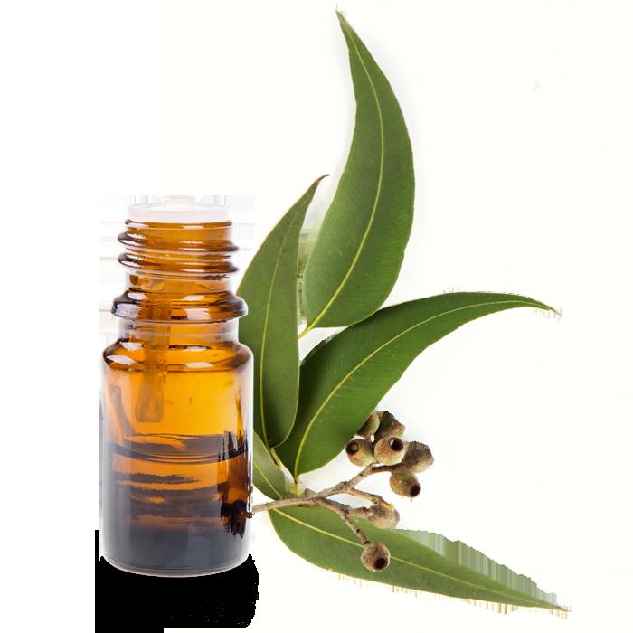 L 39 huile essentielle d 39 eucalyptus utilisation bienfaits et pr paration conseils beaut sant - Piqure aoutat et huile essentielle ...